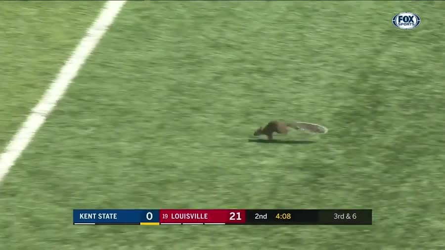 Trash that brings some light in the void. shout out to kittymello for showing this cute fluff ball Rumor is this squirrel is gonna join the Wisconsin Badgers, s