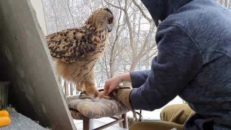 Owl. .. ahh Ahhhh AAAAHHHHHHHHHHHHHHHHHH