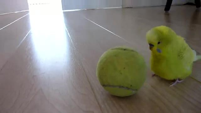 Birdball. .