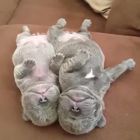 Monday's Cute Things - 4/9/2017. join list: CuteStuff (2125 subs)Mention History They probably all are, who knows. I like cute things... I can't handle myself when i hear otters.