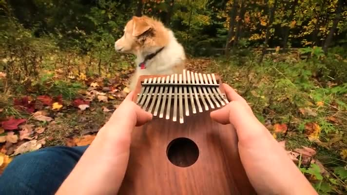 Love your doggo. .. ecthelion sticky. I bring the source The guy goes by AcousticTrench and the puppy is Maple