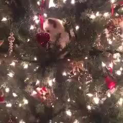 Monday's Cute Things - 25/12/2017. join list: CuteStuff (2125 subs)Mention History murrchrimmus ya big nerds.. Merry christmas, them tags though.
