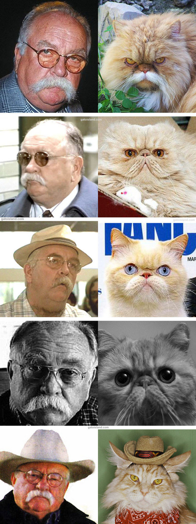 5 Cats That Look Like Wilford Brimley. Made by GatoIsland.com.. Timm!. He done thing's he shouldn't have, like Diabeetus.