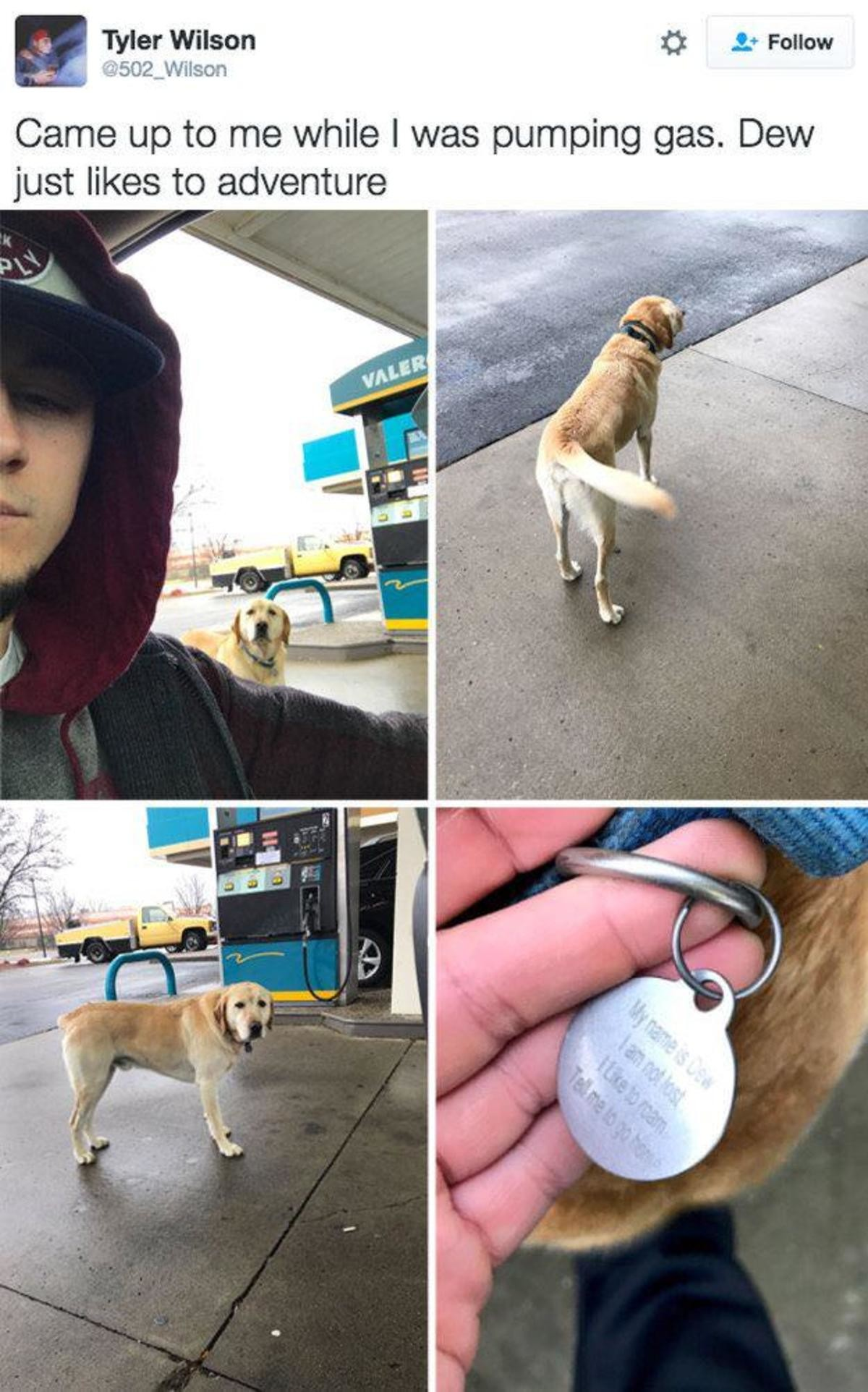 Adventure doggo. join list: CuteDogs (233 subs)Mention Clicks: 4485Msgs Sent: 28713Mention History. f Tyler Wilson (1: FAI Follow 5, :;3502_ Wilson Came up to m