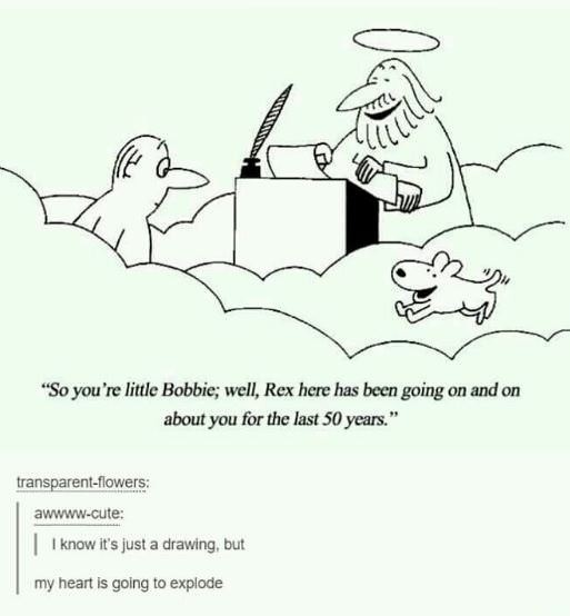 """All dogs go to heaven. join list: SoWholesome (188 subs)Mention History.. . Imagine the awkwardness of all the dogs you've ever owned being like... """"Sup' Im Rover. Bob was my human"""" """"Hi Rover im Bingo. Bob got me after"""