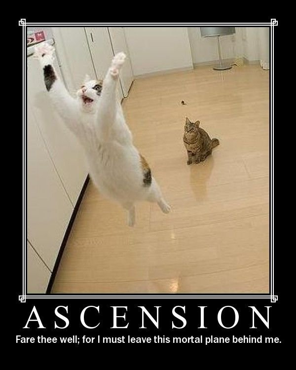 Ascension cat. . Fare that well; far I must leave this mortal plane behind me.. Is that.......
