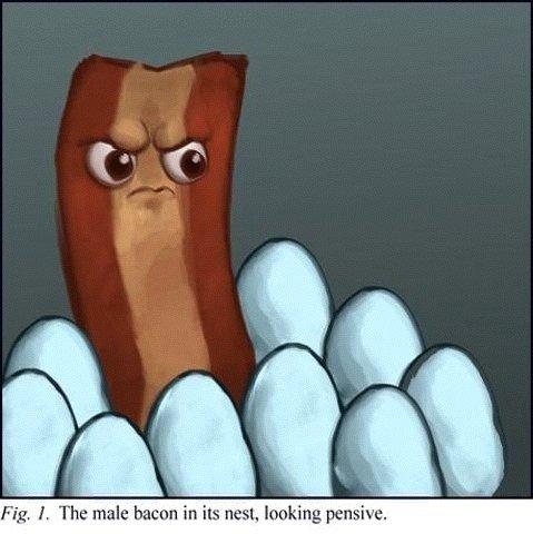 bacon (n). lulz. Fig. I. The male hacen in its new ',),. ffffaggot