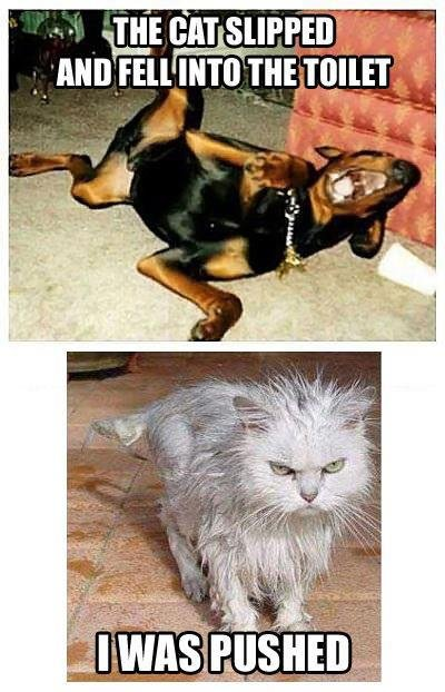 Bad Dog. lol.