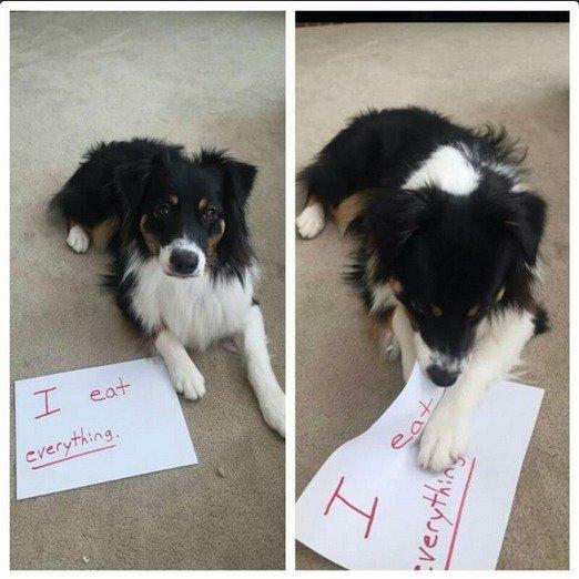 Bad Dog. .. Piont Proven.
