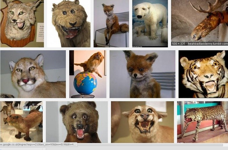 Bad taxidermy is golden. I cant be arsed making a compilation. Just google 'bad taxidermy' for a giggle... Hey hey hey