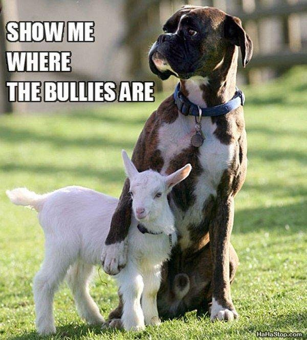 Badass Guard Dog. . iii