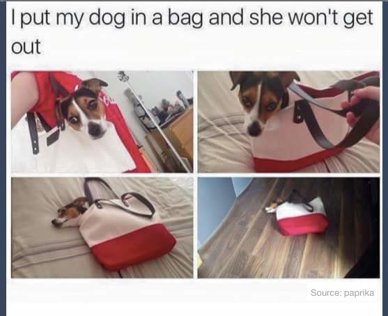 bag doggo. .. that's cause you trapped him in a pokeball!