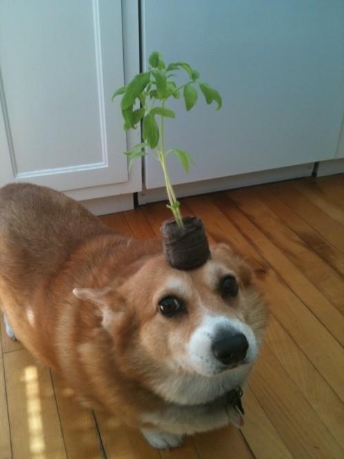 balance doggo. .. IS THAT DIS DOGGO?
