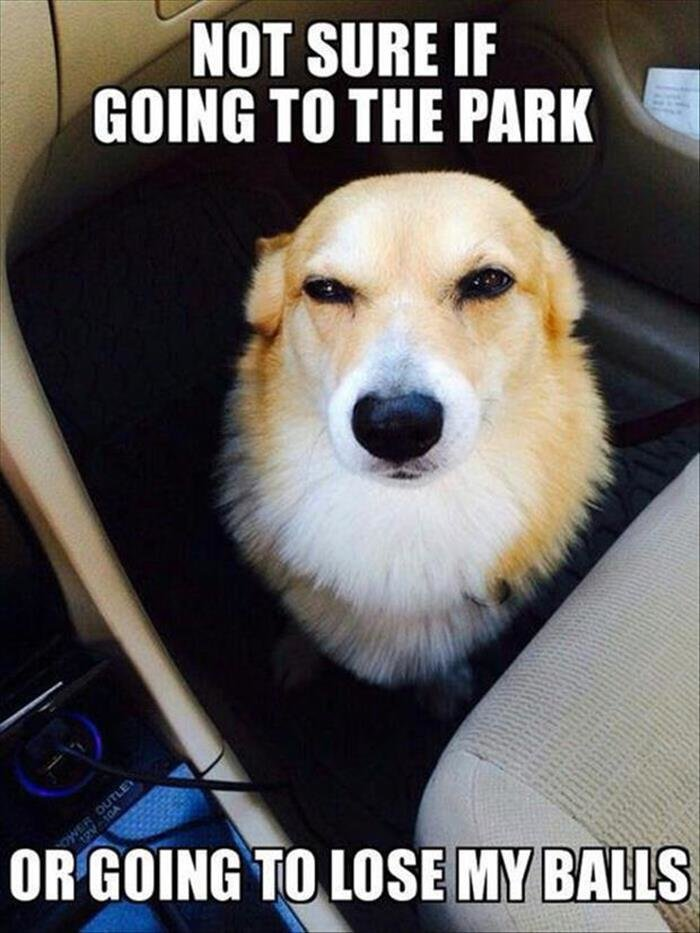 Ball Park. Source: Dumpaday. mm I Hm m. Plot twist: goes to the park and looses his tennisballs