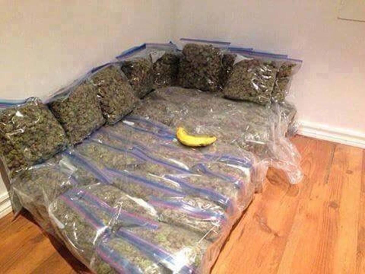 banana for scale. .. nice kushions bro hahahahaah, geddit? like kush? heheuehueeheuheuh dude, were sitting on cloud nine dude!! hahahauhsauha wwwwwwwweeeeeeeeeeeeeeeeeeeeddddddddddd