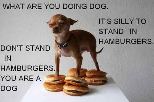banana hammock. say banana hammock. WHAT ARE . Ill ll . DON' T STAND Rall HAMBURGERS. YOU ARE A l DOG