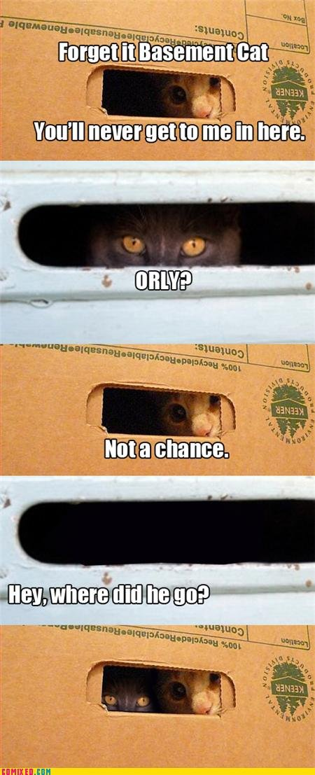Basement Cat. .. RUN CAT!!