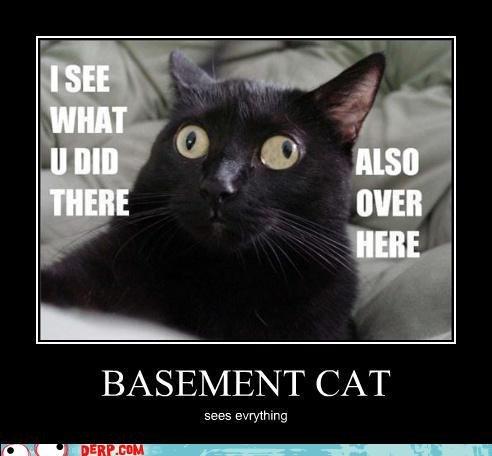 Basement cat!. . eegee dryers