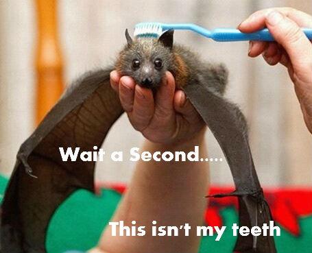 Bat. . is isn' t my teeth