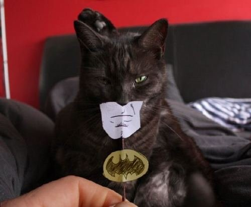 Batcat. ~<br /> ^ i love tildes.. Wow...really? Go check the front page, asshole. If you're going to repost, at least wait a few days. God damn.