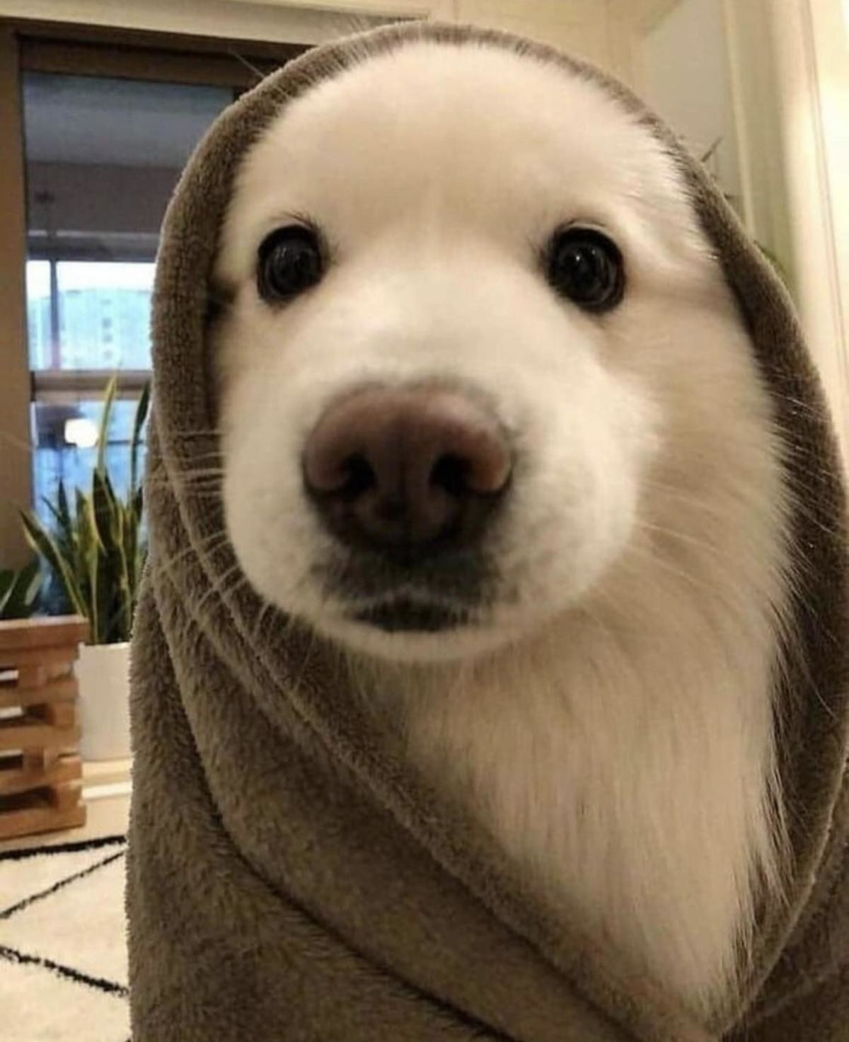 bathing day :3. join list: DoseOfCuteness (977 subs)Mention Clicks: 213252Msgs Sent: 3881218Mention History.. Obi Wan looks hella cute here