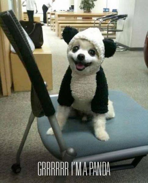 BAWWWWW. I BAWWWW'D. RAR] WM PANDA