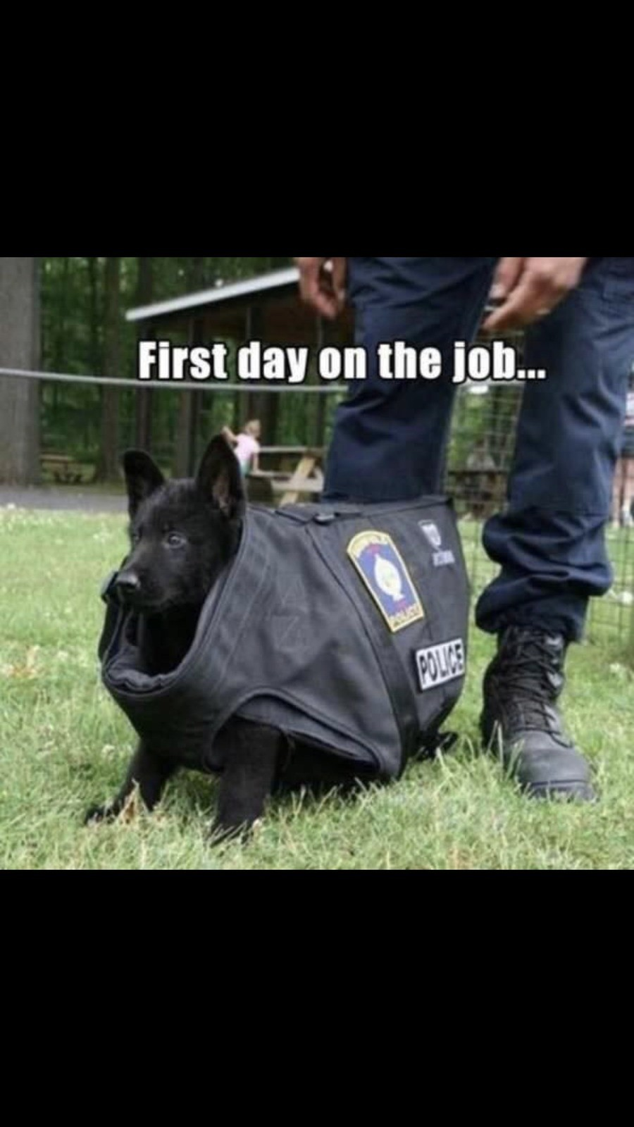 Be safe little pupper. Streets are ruff. .. last day on the job