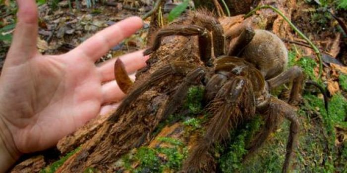 """Be young, have fun, taste spider.. lets take some quotes from the article in question """"I could clearly hear its hard feet hitting the ground and dry leaves"""