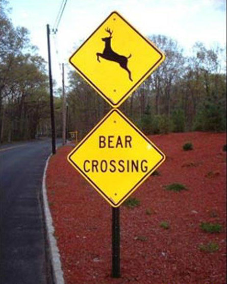 bear crossing. . BEAR CROSSING