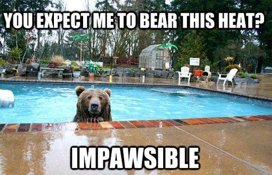 Bear pun. Tags are bear.