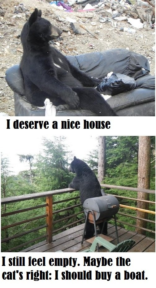 Bearly Legal 2. source: imgur. I Hill