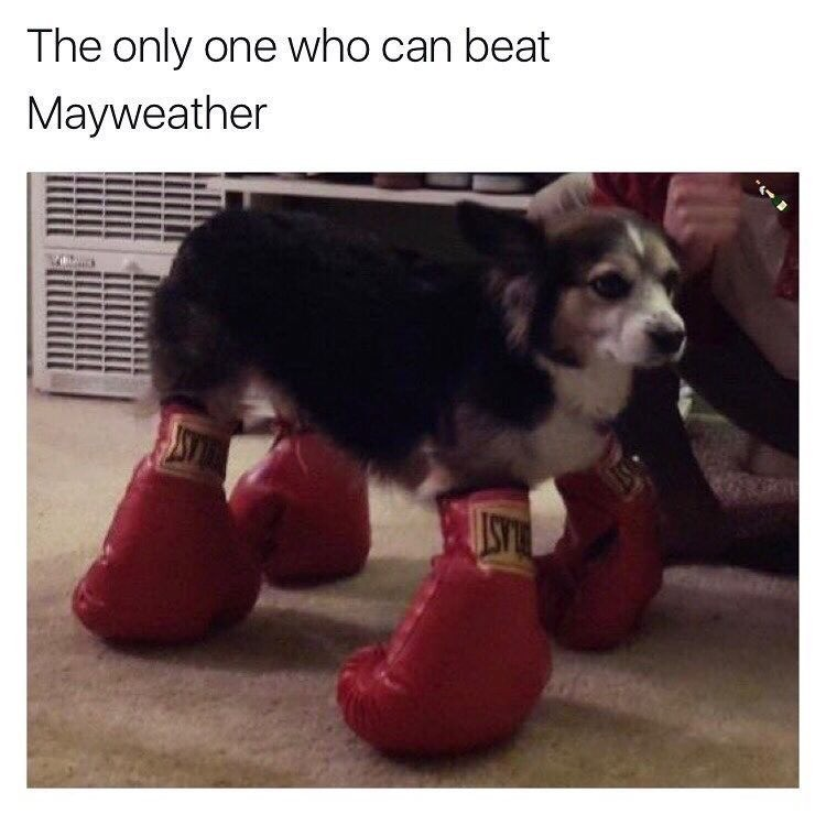 beat. .. It's a Boxer
