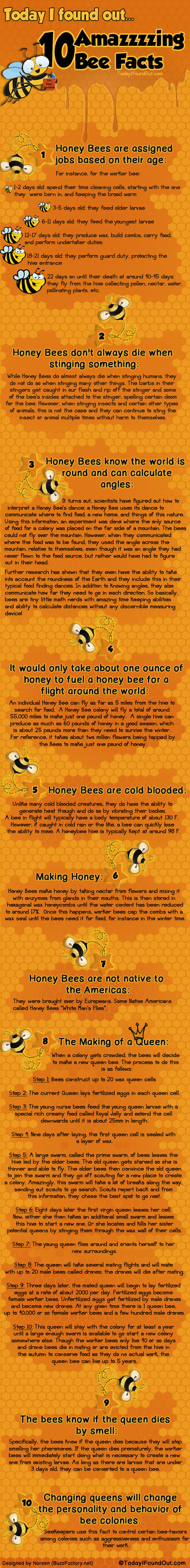 Bee infographic. .. they can also calculate distance and such. a study was done at my college where honey bees were given a food source each morning that was a certain distance fro