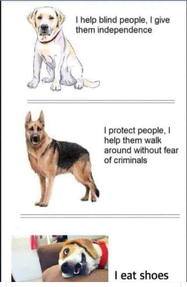 Best boy. .. if im correct, german shepards are (being) phased out of police use due to the effects of selective breeding making them incapable of serving as police dogs.