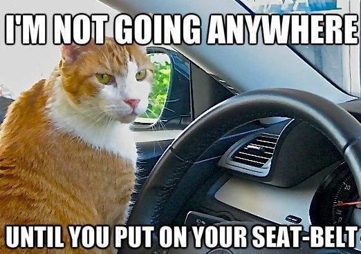 "Best cat. funny fatty cat. ikrr on Venn "" robing"