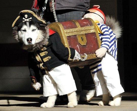 Best Dog Costume. .. cool repost bro