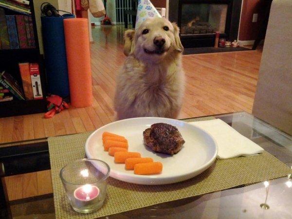 Best Dog dinner. .