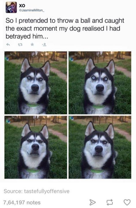 Betrayal. . Se I pretended m threw a bell and caught the exact my dog re: -Heed I had behaved him.... You monster.