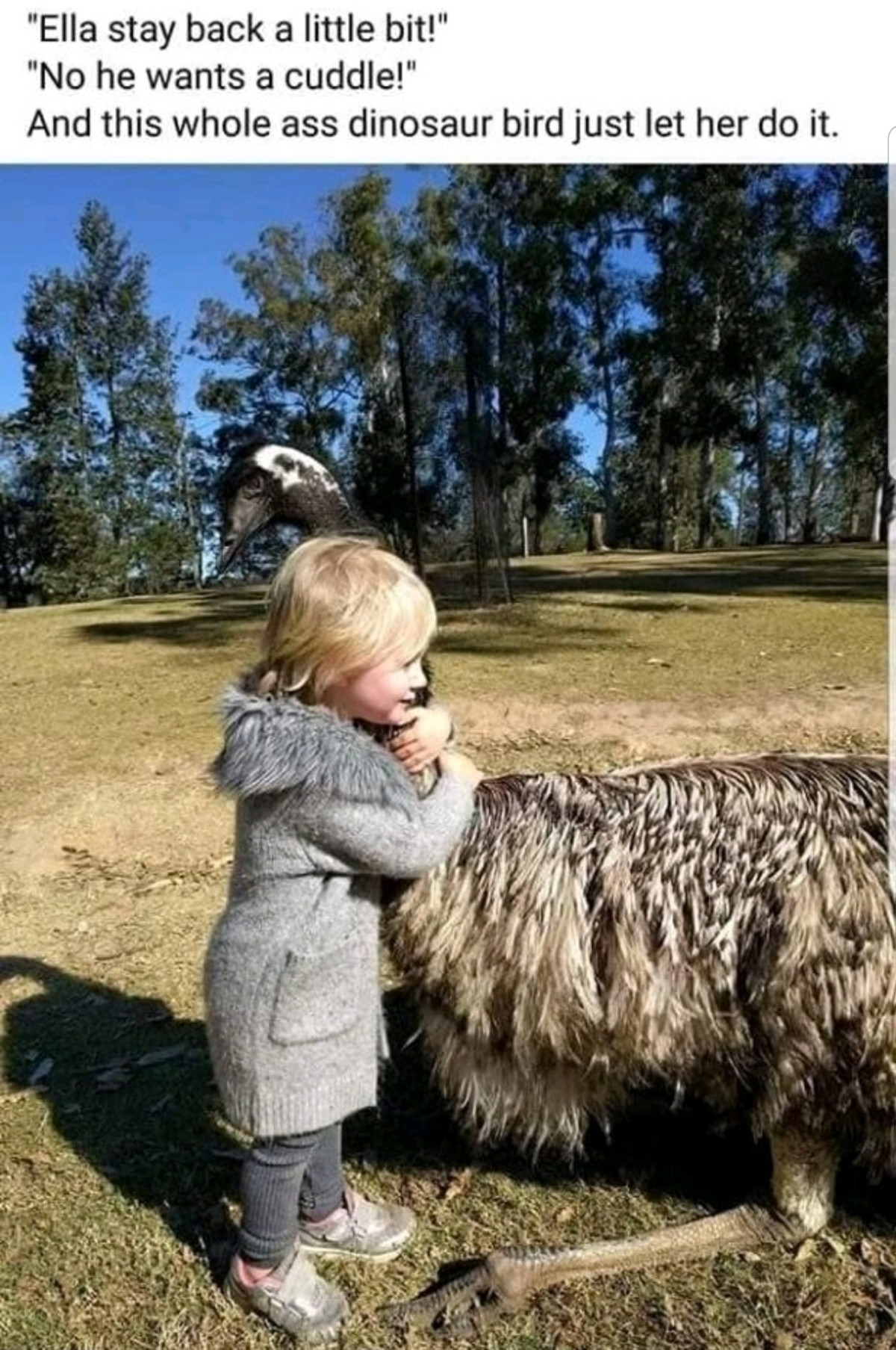 Big Bird. .. WHAT ARE YOU DOING. THATS AN EMU. YOUR KID GONNA GET HALVED