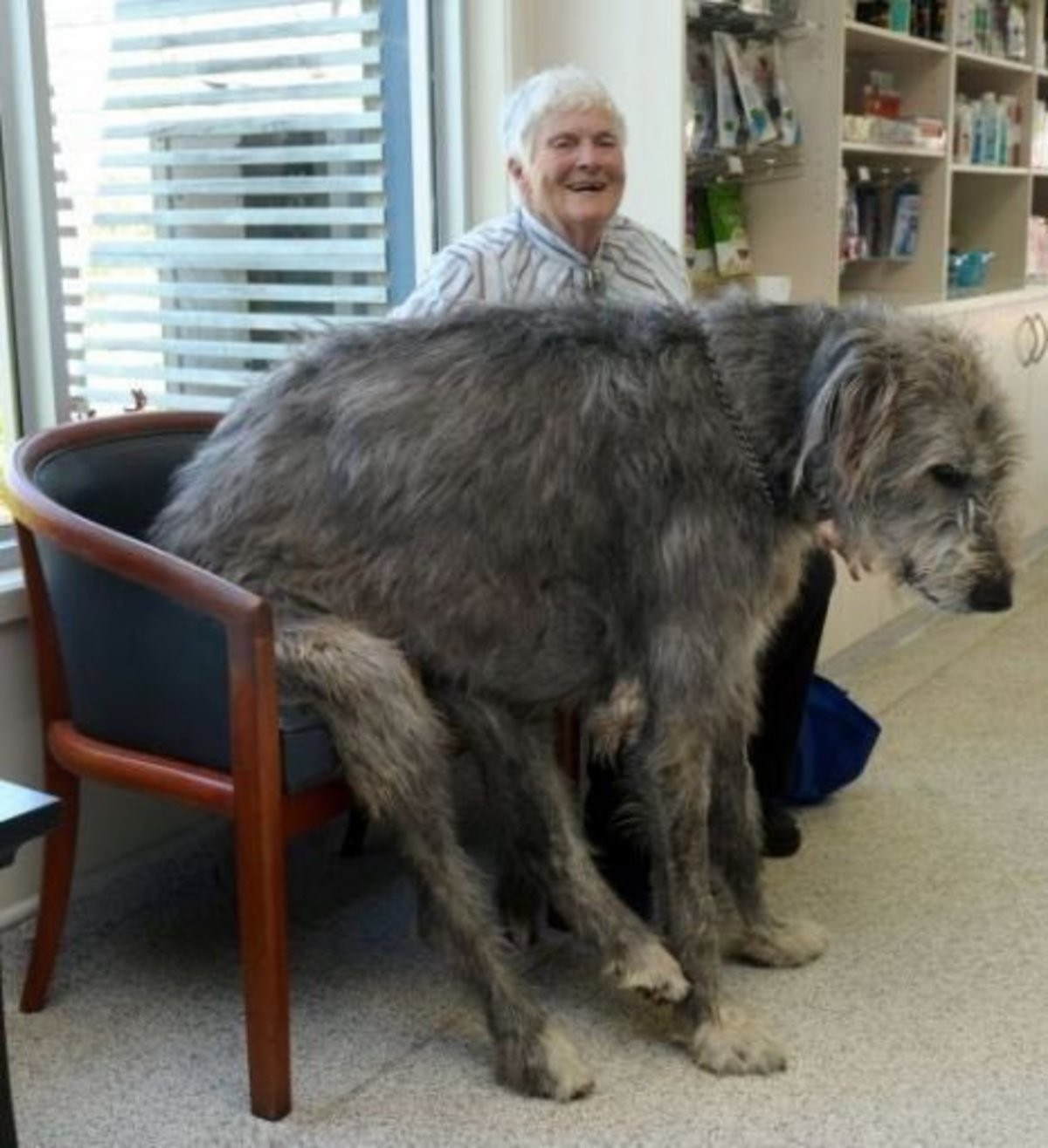 Big doggo. Makes me miss my wolfhounds a ton.. Old man and old boi together