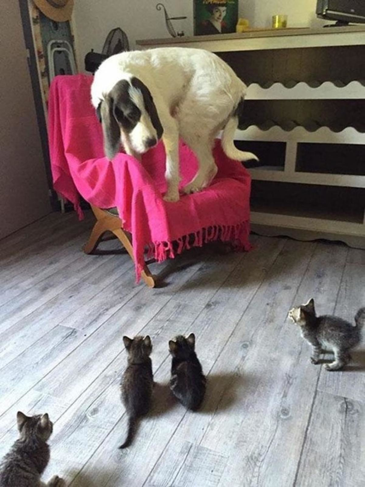 Big pooch nervous around the kitties. .