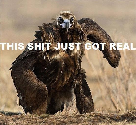 BIG BIRD. .
