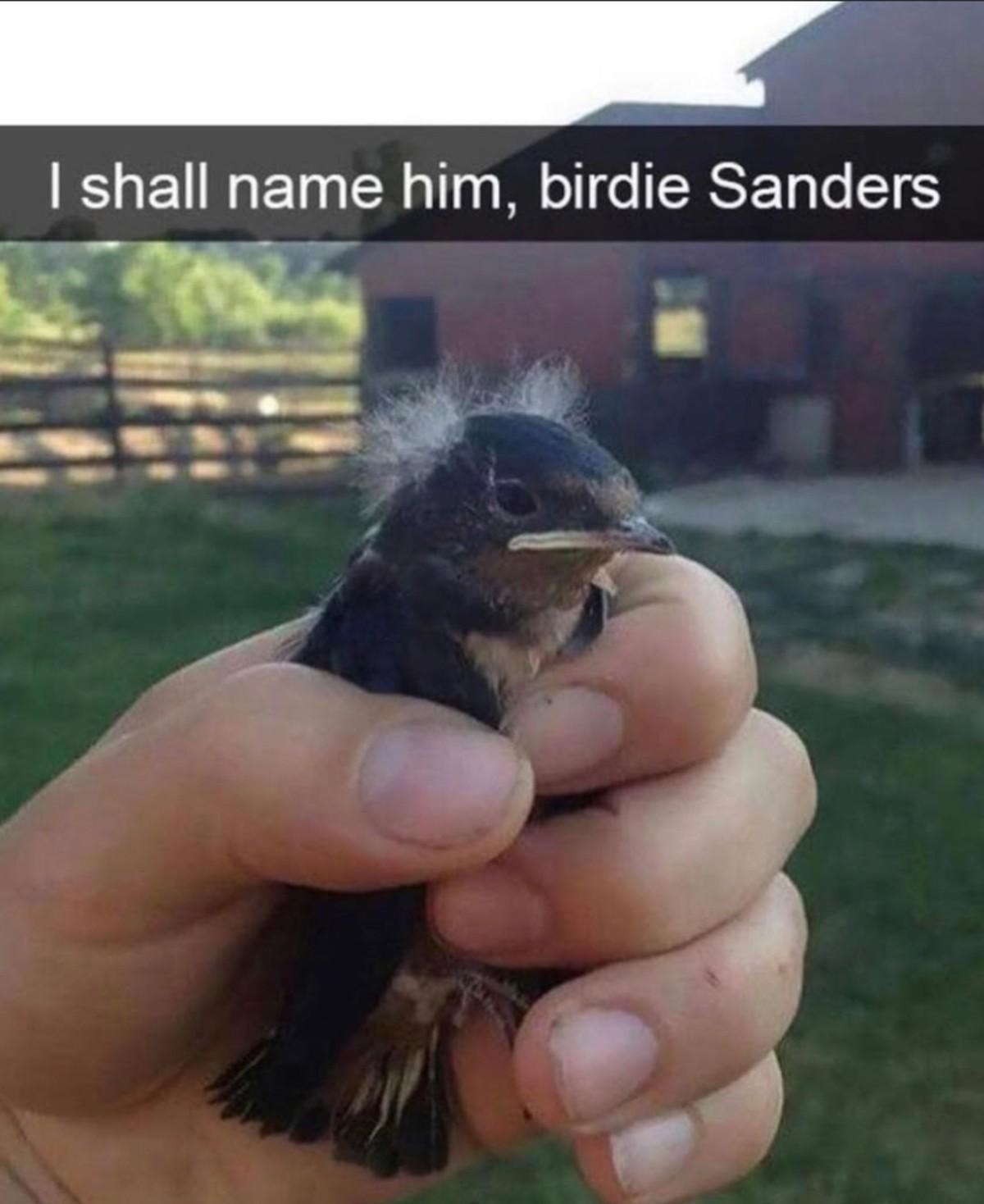 Birdie Sanders. .