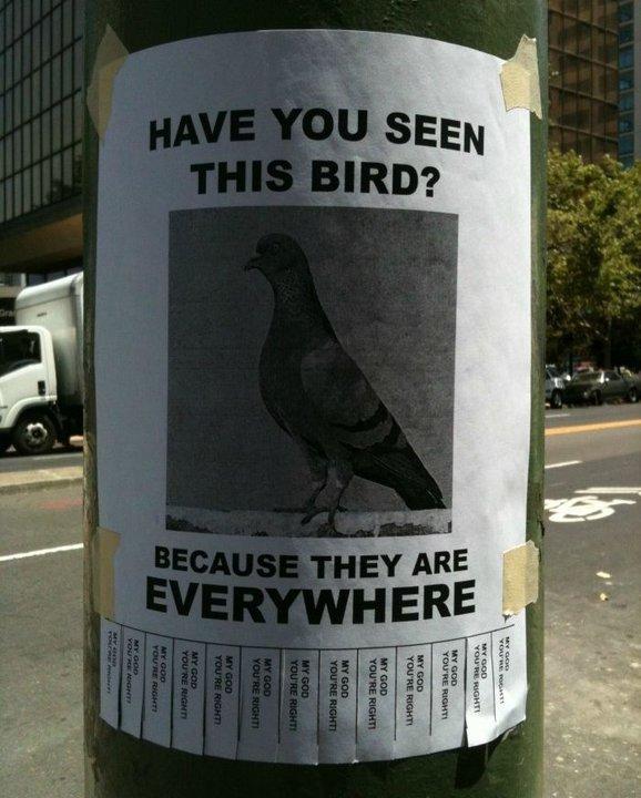 Birds. i lol'd, THUMB!!!.