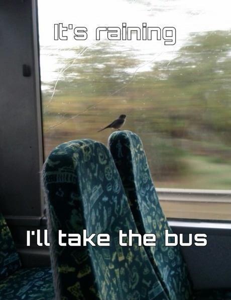 birds. . I' ll take the bus
