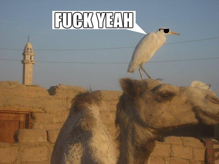 YEAH. buff ass mofo bird<br /> btw first upload hope you guys like it .