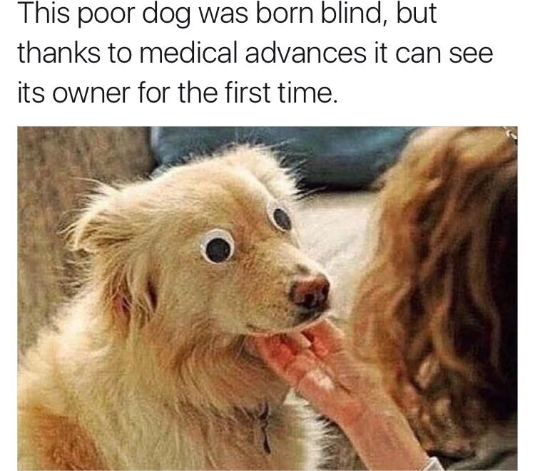 Blind Dogs. . This poor ' -'! born blind, but thanks to medical '' ) ll it can 'itim' iir, ft!] its owner for '? lit,? first time.
