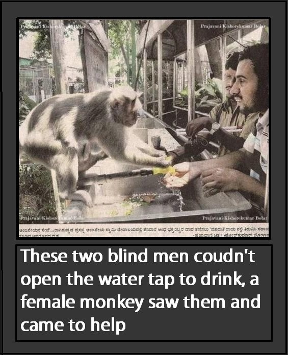 Blind Dudes. . m mid air -he -:::rrf Trot Trata' Rami Gienah These two blind men coudn' t open the water tap to drink: a female monkey saw them and came to help