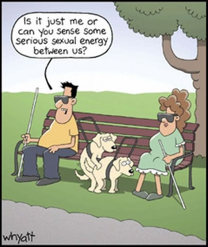 blind dogs. .