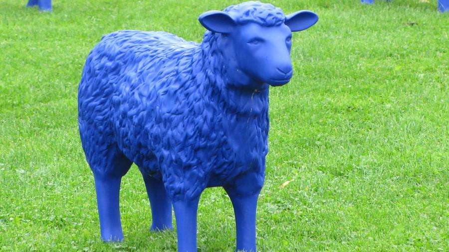 Blue sheep. .